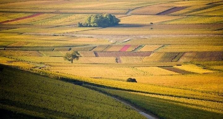 Partons à la découverte de la Bourgogne ~フランス語でワインを学ぶ ブルゴーニュ編~