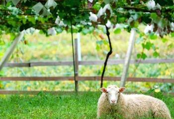 \11/7(土)限定開催!/『山梨ヌーボー2020』を楽しもう!ベテラン醸造家がご案内するオンラインツアー