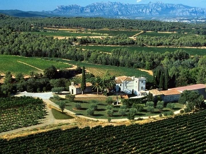 \2/26(金)開催/スペイン名門ワイナリー「トーレス」から生中継!オンラインワイン講座