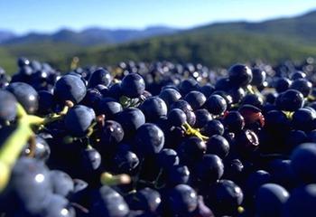 Roussillon wine discovery ~英語でワインを学ぶ ルーション編~