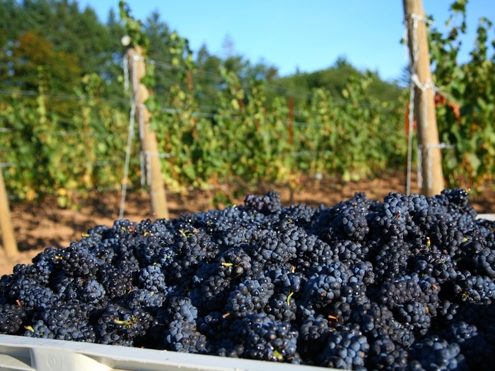 米国ポートランドの日本人女性醸造家に密着!12月~5月まで全3回に渡りワイン造りの様子をご紹介