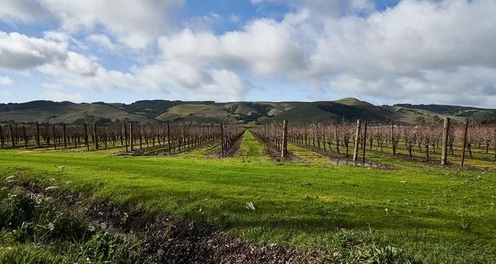 カリフォルニアワイン ベーシックマスター