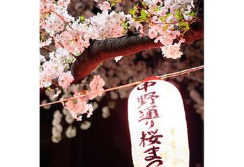 夜桜@東京