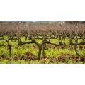 【ワインの基礎知識】おいしいブドウを育てる