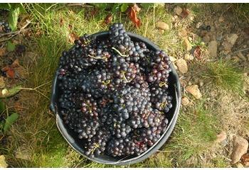 ワインと収穫祭