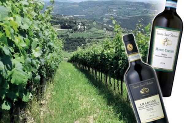 北イタリアのおいしいワインの話