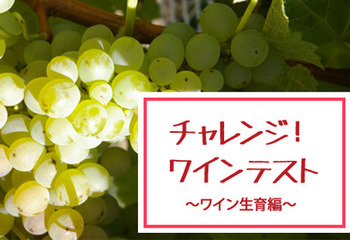 チャレンジ!ワイン5問テスト【ワイン生育編】