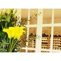 春のプリムールを彩る花 ~ フランス ボルドー ~