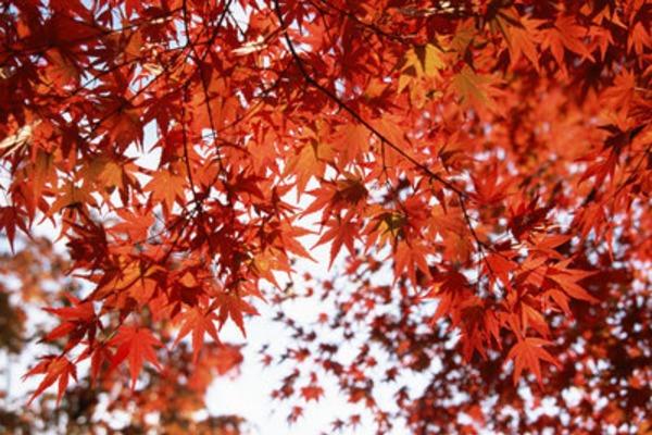 ワインと紅葉~色の変化と熟成