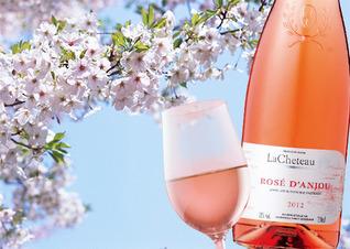 桜の下で乾杯!お花見におすすめワイン♪