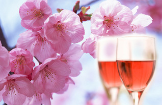 桜と楽しむロゼワイン 6選 【2018】